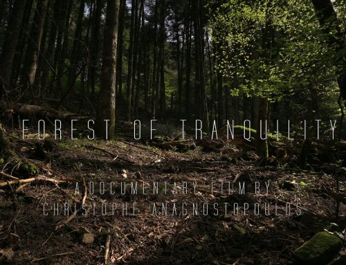 "New Project ""Forest of Tranquility"" Teaser Trailer"